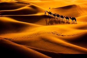 Bugis Photo Cup Circuit Merit Award - Jing Gu (China)  Camel Shadow