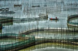 Bugis Photo Cup Circuit Merit Award - Lee Eng Tan (Singapore) <br /> Xiapu Prawning Nets