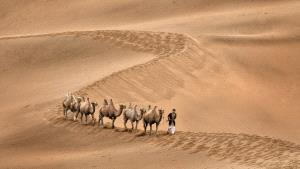 PSA HM Ribbons - Lee Eng Tan (Singapore)  Desert Convoy Camels