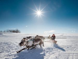Bugis Photo Cup Circuit Silver Medal - Alexey Suloev (Russian Federation) <br /> Racing On The Reindeer-Yamal