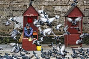 Bugis Photo Cup Circuit Merit Award - Mustafa Evirgen (Cyprus)  Pigeon Man