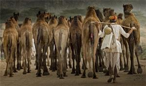 PhotoVivo Honor Mention - Yufeng Feng (China) <br /> The Back Of A Camel