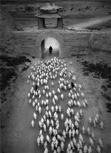 PSA Gold Medal - Jixian Shi (China) <br /> Song Of Herding Sheep