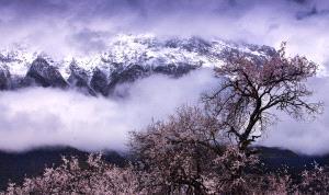 PSA HM Ribbons - Xiangjun Li (China)  The Sanctuary