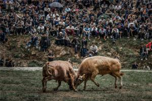 PhotoVivo Gold Medal - Hailun Cao (China)  Bullfighting Show