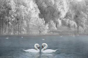 PhotoVivo Honor Mention - Qiang Lv (China)  Pledge Love