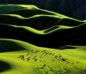 Bugis Photo Cup Circuit Merit Award - Jinhuan Zhang (China)  charming prairie