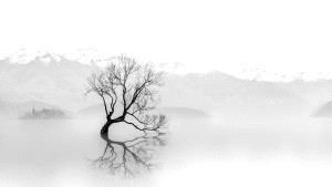 BPC Merit Award - Chen Chu (Australia)  Lonely Tree