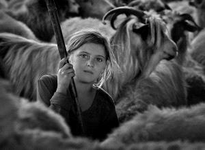 APAS Gold Medal - Istvan Kerekes (Hungary)  Shepherd Girl