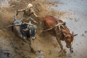 BPC Merit Award - Xiaoguang Cao (China)  Running Bulls Competition 9
