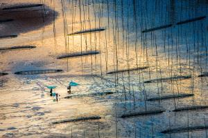 APU Gold Medal - Zenghua Liu (China)  Fishing In The Mud