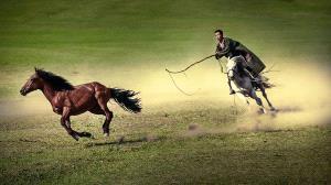 PhotoVivo Honor Mention e-certificate - Chen Ni (China)  Lasso A Horse
