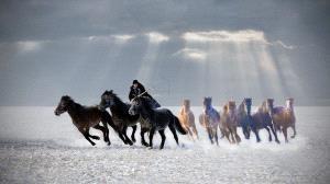 APU Gold Medal - Hugo Chan (USA)  Horse Looping 4