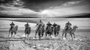 APAS Gold Medal - Hugo Chan (USA)  Camel Racing