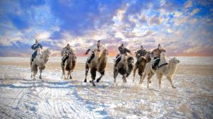 APAS Honor Mention e-certificate - Hugo Chan (USA)  Camel Racing