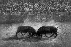 BPC Merit Award - Yun Lin (China) <br /> Bullfight