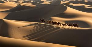 PhotoVivo Gold Medal - Yun Lin (China)  The Camel Shadow Of The Desert
