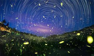 BPC Merit Award - Junlin Tang (China)  Dreamlike Jungle