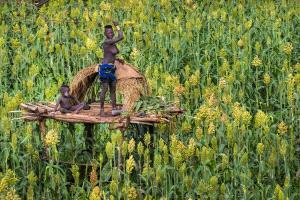 PSA Gold Medal - Huifen Wang (China)  Guard Farmland