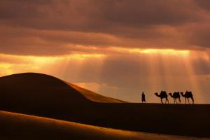 APU Gold Medal - Shicong Xiao (China)  Desert Camels 1