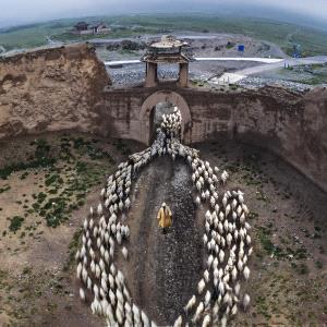 BPC Merit Award - Jun Ye (China)  Herd Back