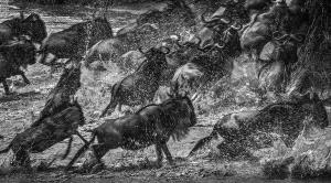 PhotoVivo Gold Medal - Zhemin Li (China) <br /> Across The Water
