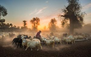 ICPE Honor Mention e-certificate - Jianhui Liao (China)  Sunset Pastoral