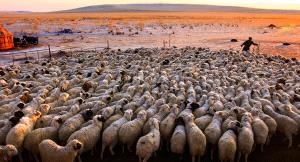 APAS Honor Mention e-certificate - Mingyou Zhang (China)  Song Of Herding Sheep