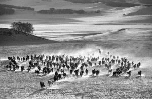 APAS Honor Mention e-certificate - Wei Wang (China)  Ten Thousand Steeds Gallop